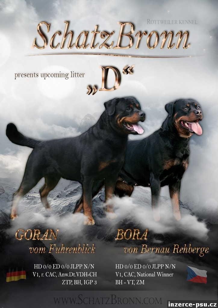 Štěňata rotvajlera s PP - Rottweiler (RTW)
